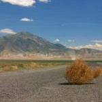 Tumbleweed photo via Shutterstock