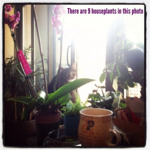 Why I Love Houseplants + GIVEAWAY for National Houseplant Week